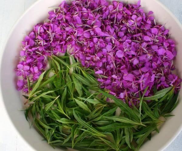 Отвары из сушеницы и иван-чая для успокаивания нервной системы